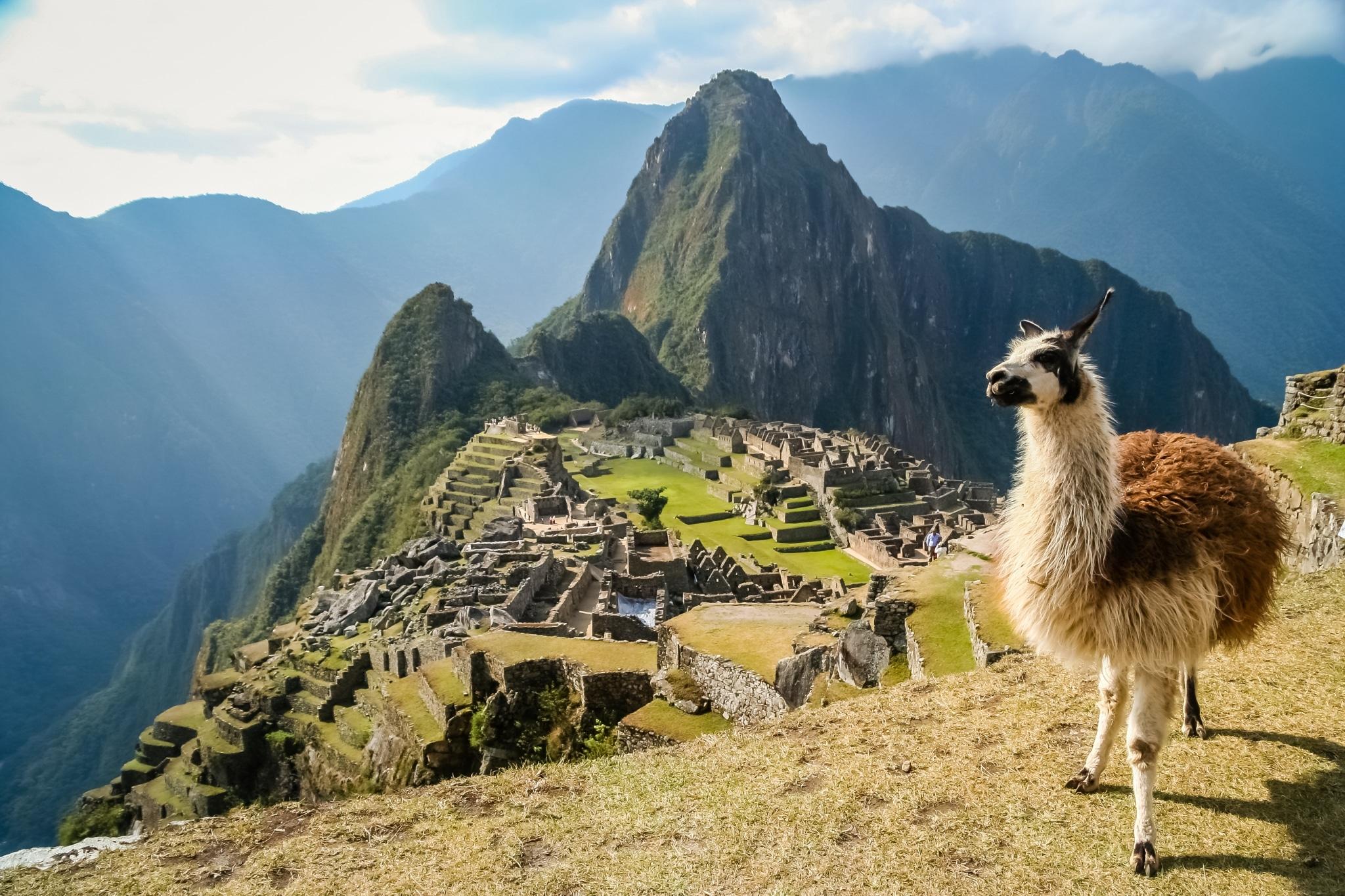 Llama frente a Machu Picchu