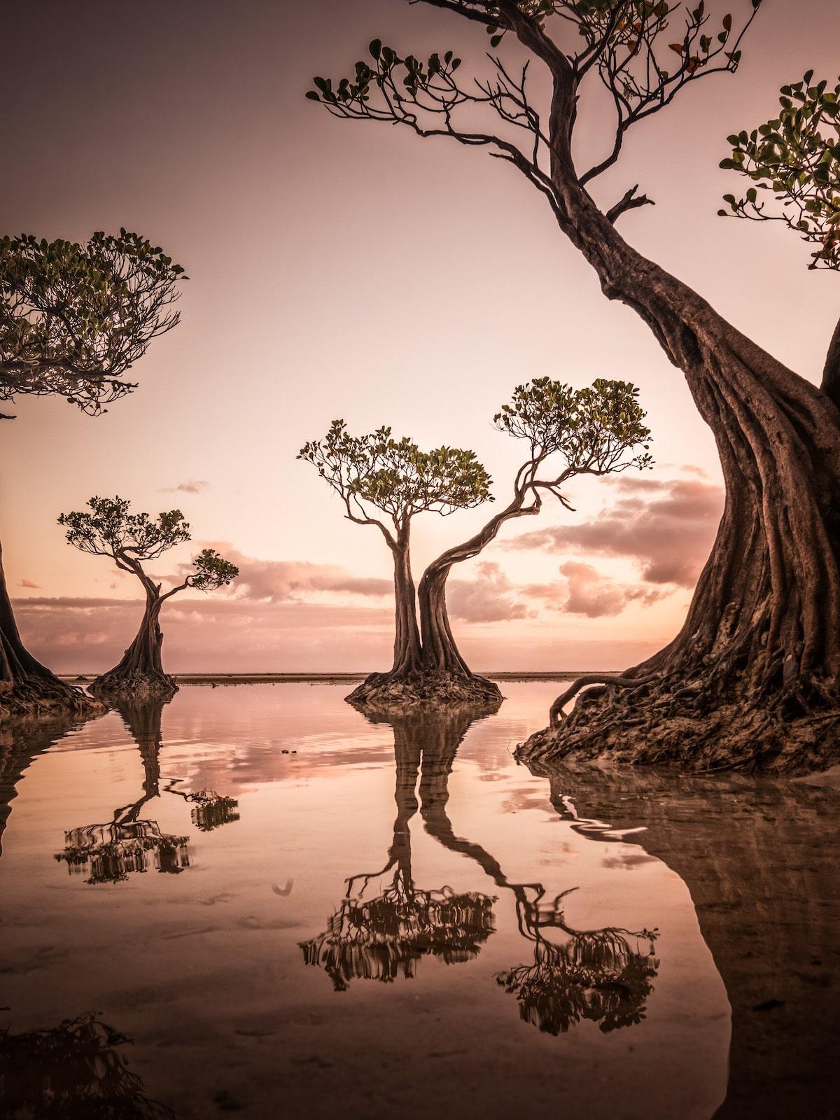 Mangrove Trees at Walakiri Beach, Sumba, Indonesia
