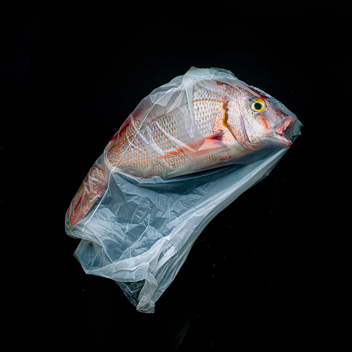 Fish Trapped in Plastic