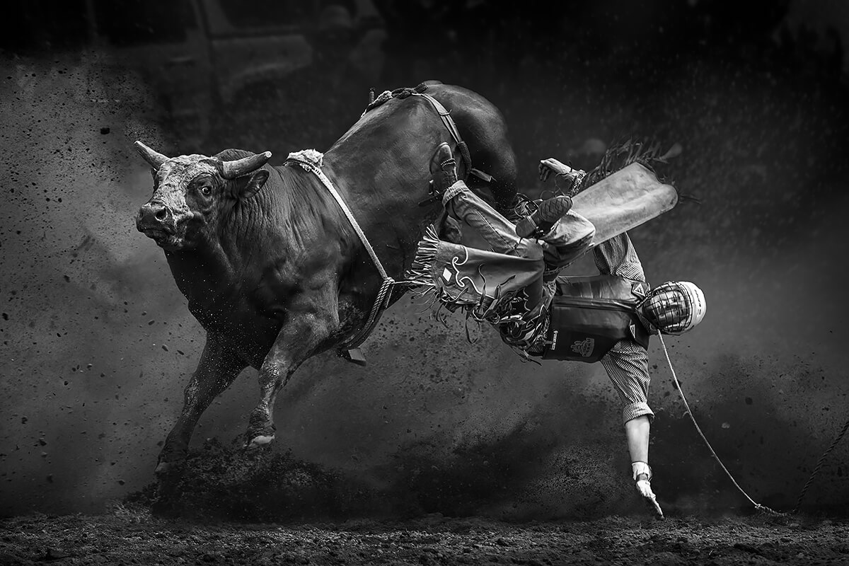 Man Being Bucked Off a Bull