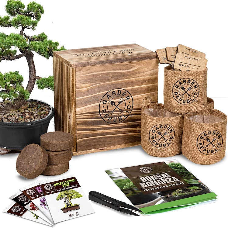 Bonzai Tree Kit by Garden Republic