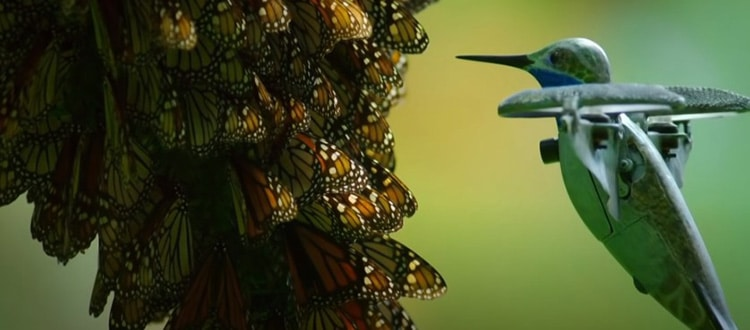 PBS Hummingbird Drone Captures Monarch Butterflies on Film