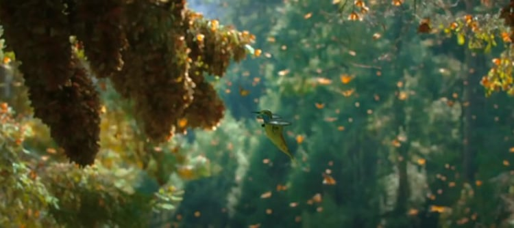 Hummingbird Drone Films Inside a Monarch Butterfly Swarm