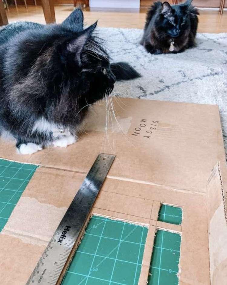 casa de carton para gatos Gentry Sanders