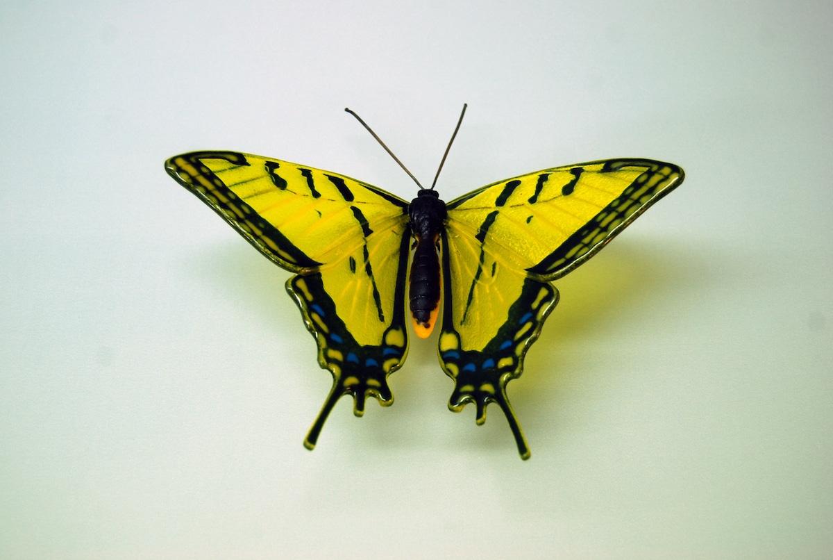 Butterfly Glass Sculpture by Laura Hart