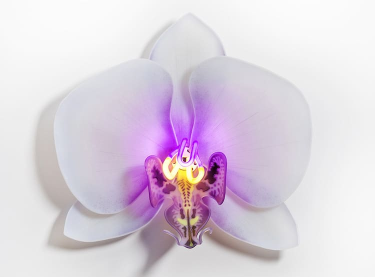 Glass Orchids by Laura Hart