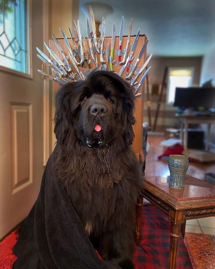 Hank perro disfrazado