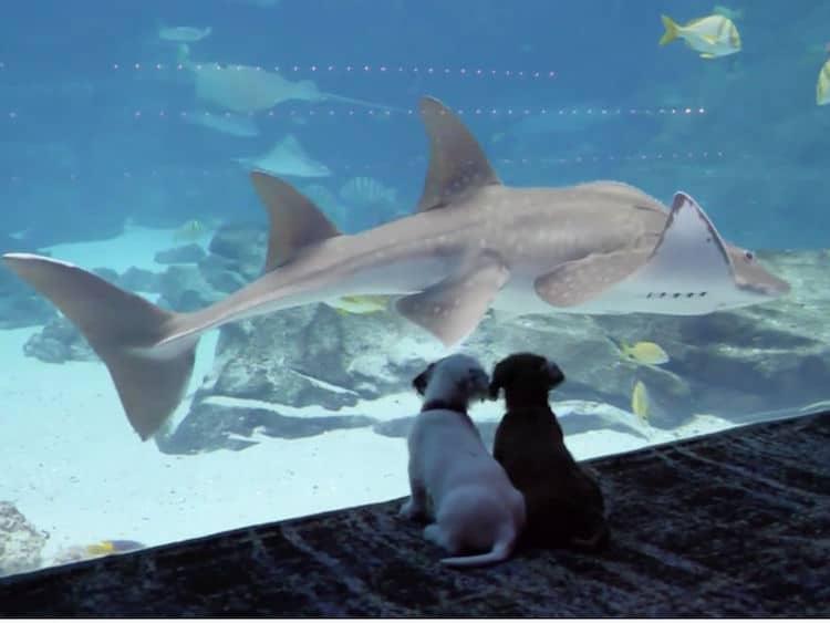Kittens and Puppies Visit Georgia Aquarium