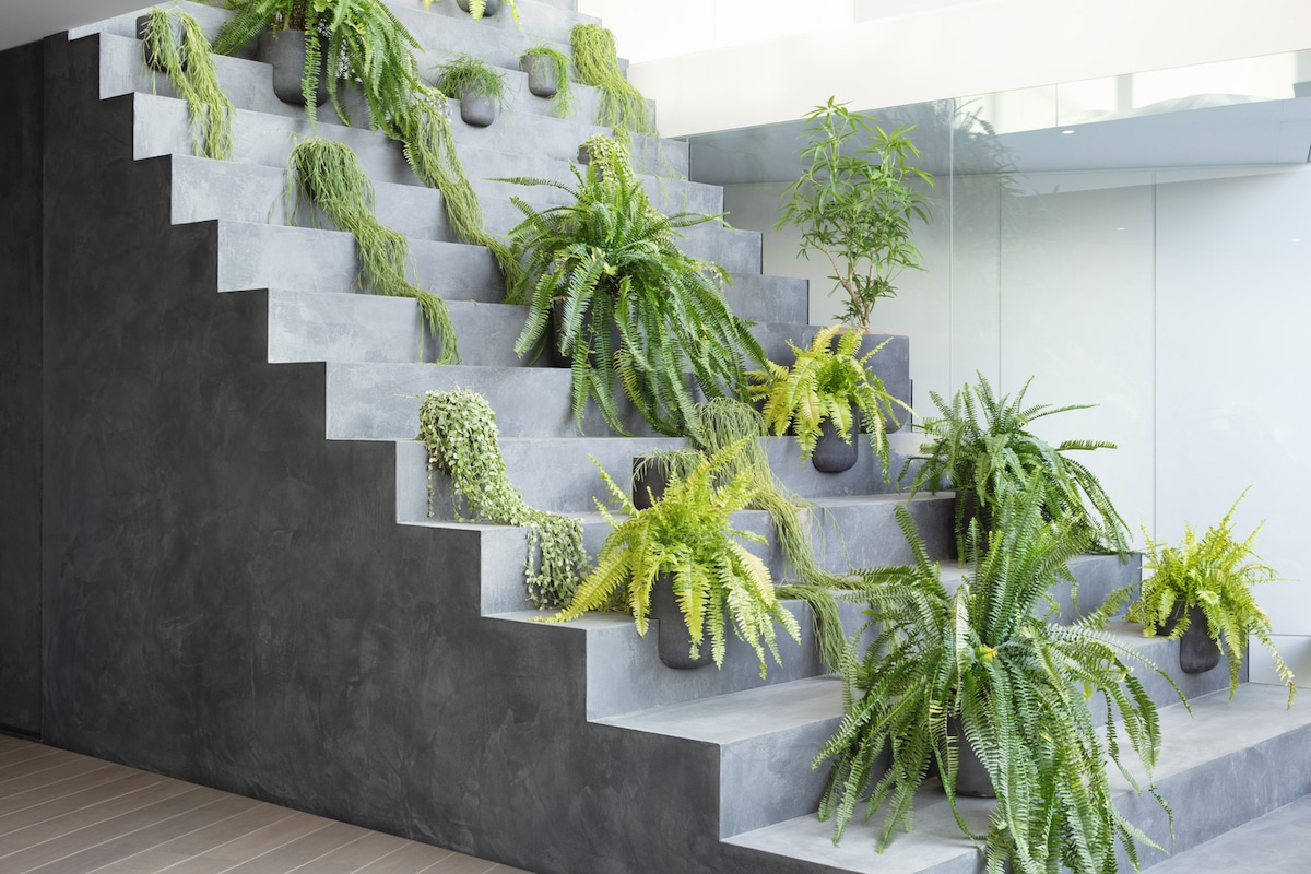 Plants on Indoor Staircase
