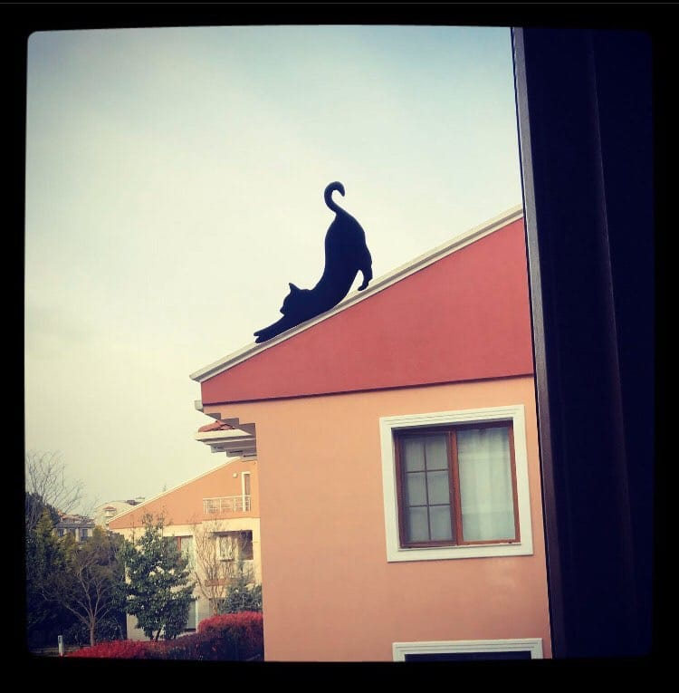 Silhouette of a cat on a roof