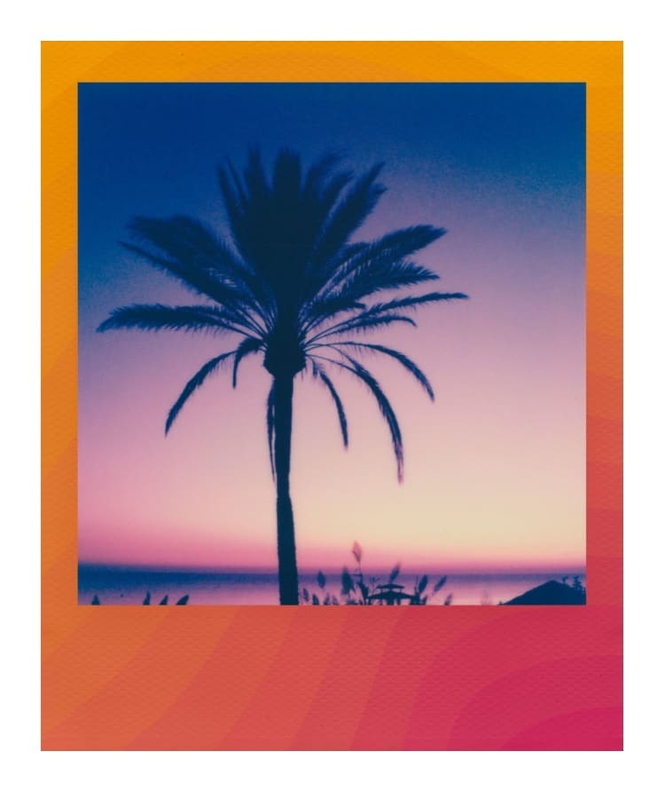 Polaroid of Palm Tree at Sunset