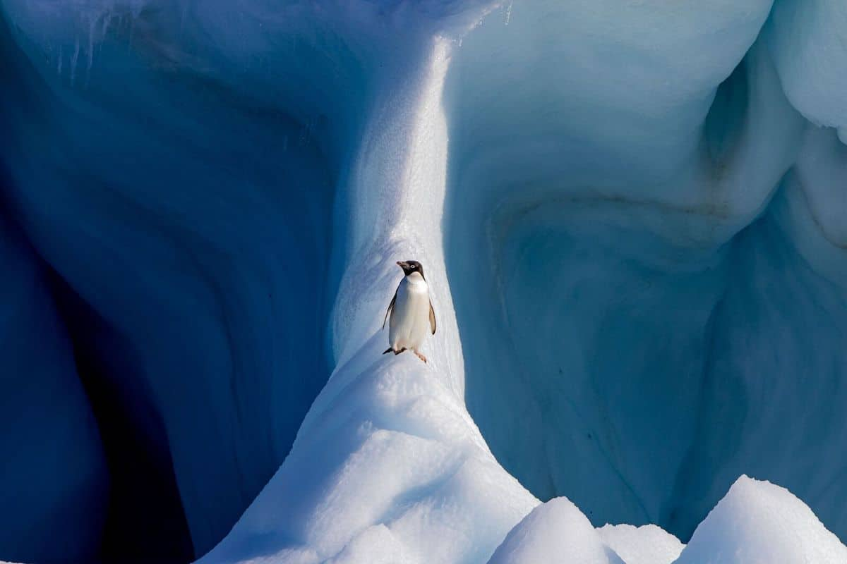 Adélie penguin standing on an iceberg off Devil Island, Antarctica