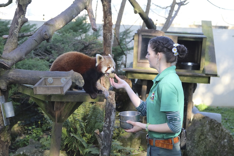 Zoo Staff Self Isolation at Paradise Park