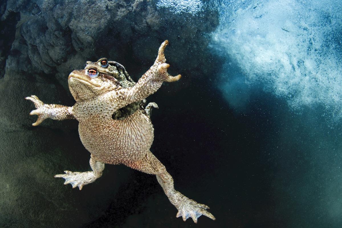 fotografia de ranas