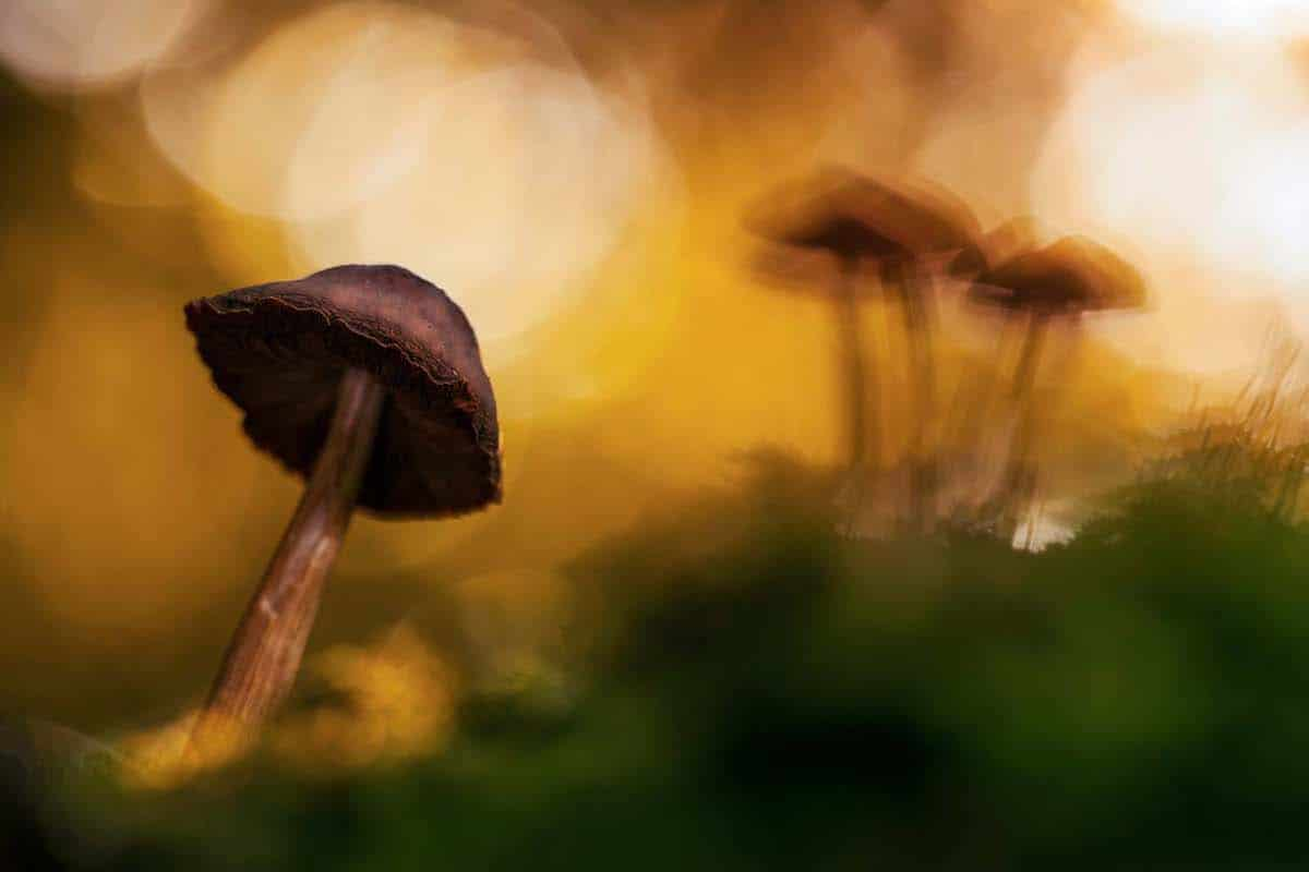 Artistic Photo of Mushroom in the Forest