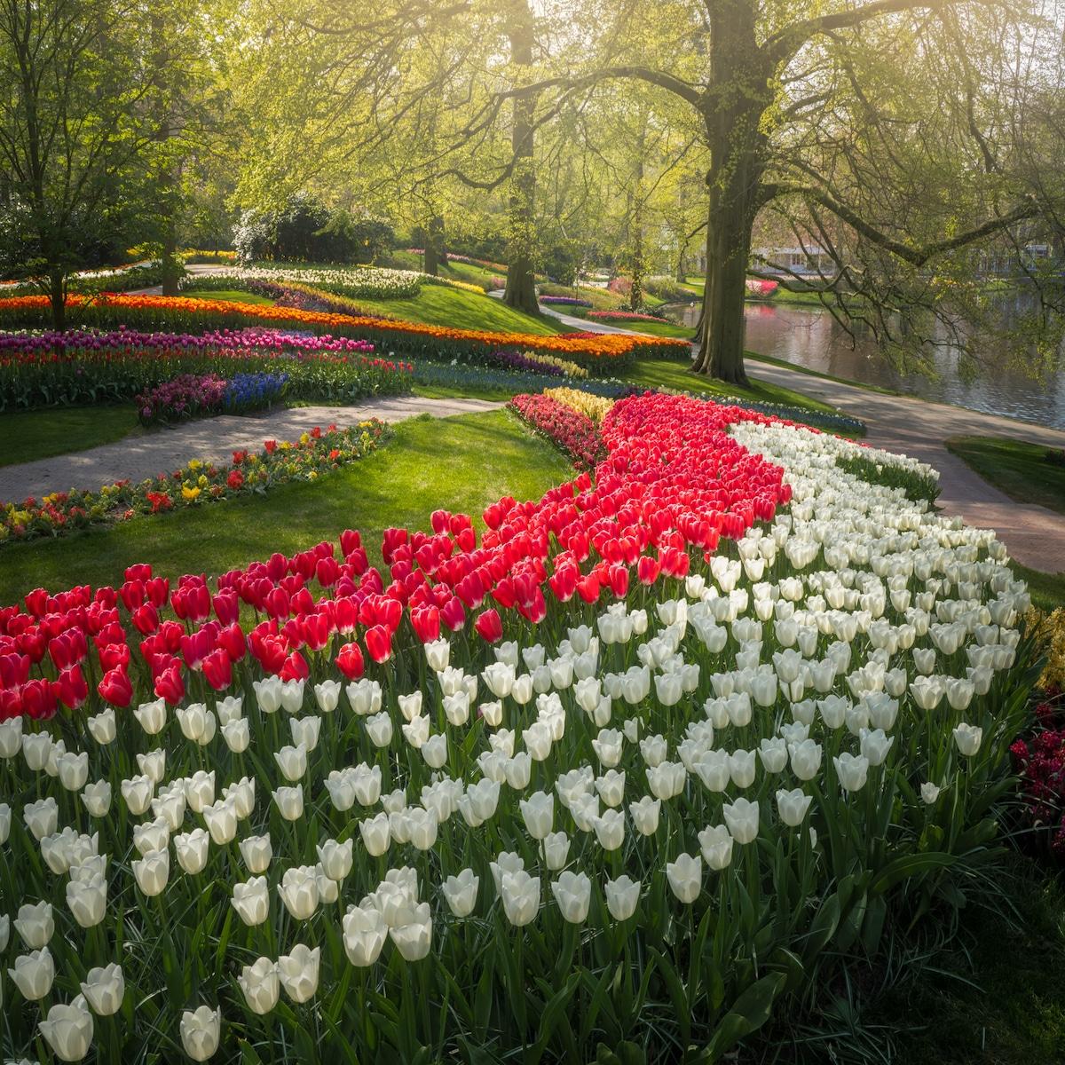Keukenhof Garden by Albert Dros