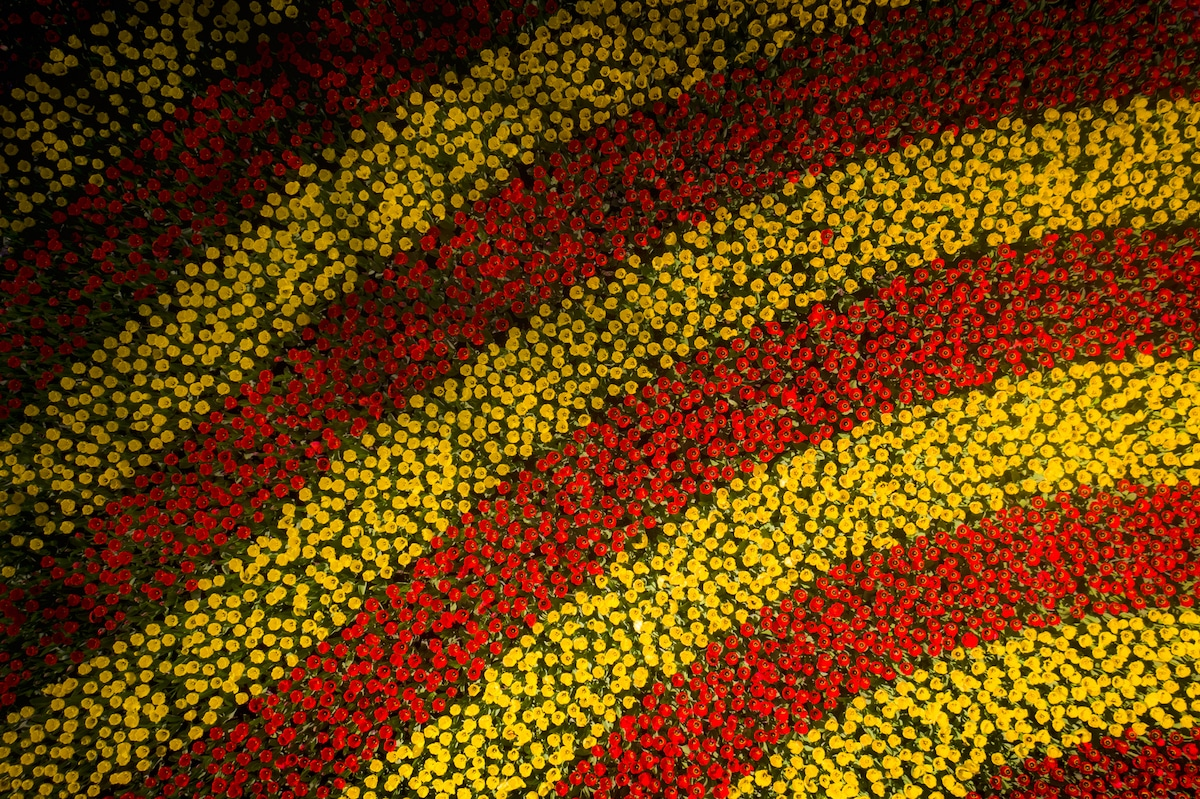 Aerial Photo of Yellow and Red Flowers at the Keukenhof