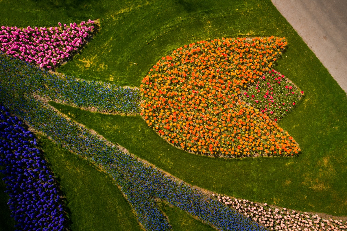 Aerial Photo of the Keukenhof with Flowers Landscape into Tulip Shape