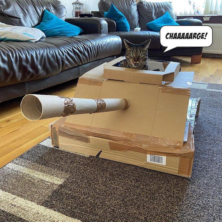 Gente En Cuarentena Crea Tanques De Guerra De Cartón Para Sus Gatos
