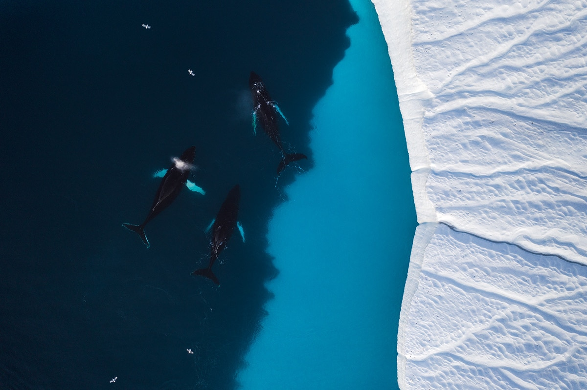 Aerial Greenland by Christian Hoiberg