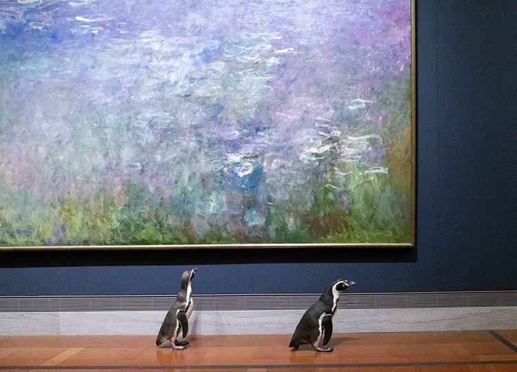 Kansas City Zoo's Penguins Visit Impressionist Gallery