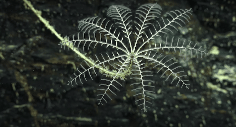 Findings from the Schmidt Ocean Institute Ningaloo Canyons Expedition