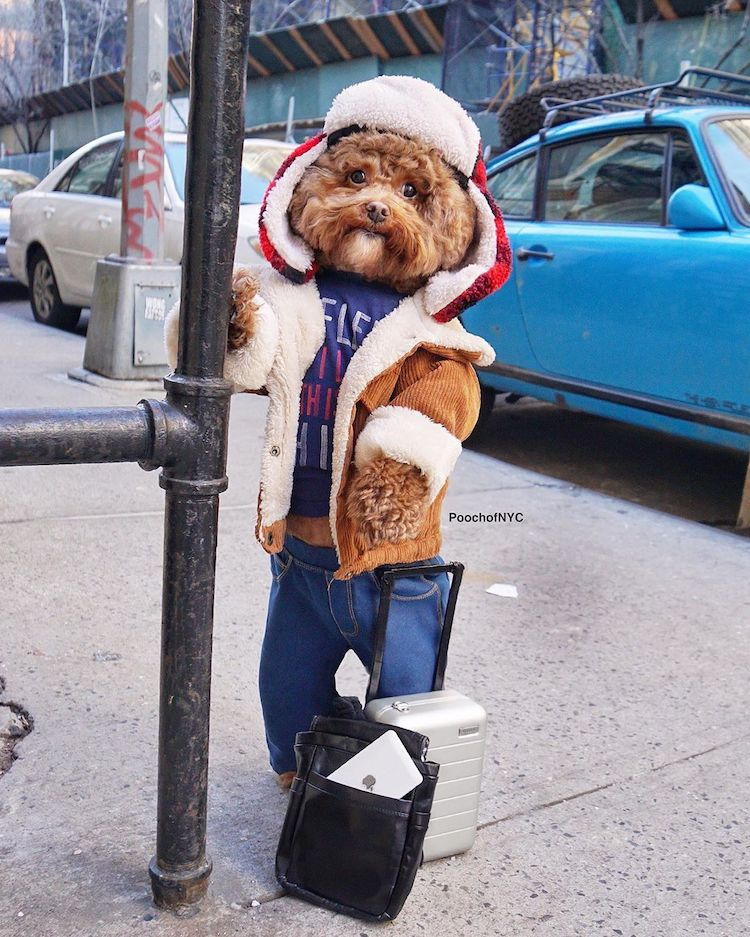 Funny Dog Outfits