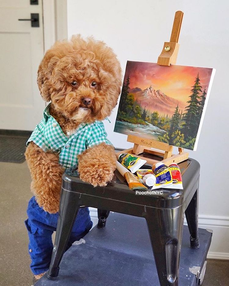 "This Stylish Pup Is the ""Bob Ross of Dogs"" With Fluffy Curls to Match"