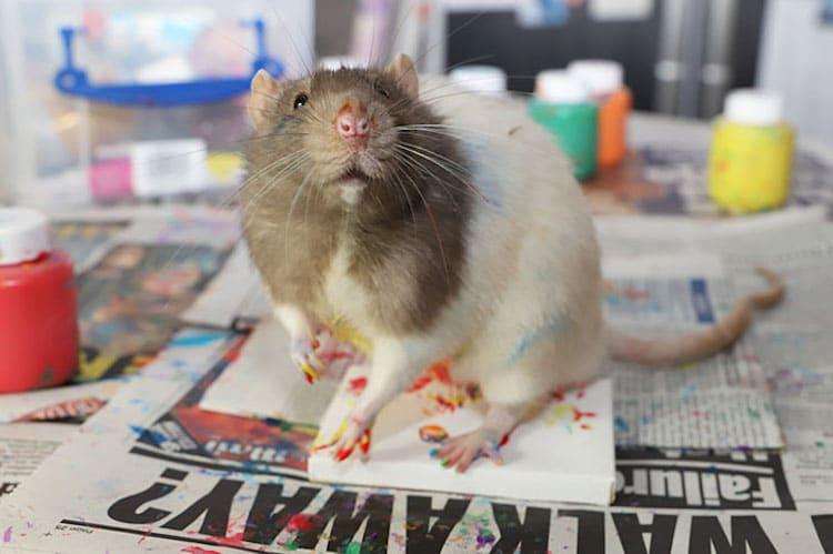 Ratas que pintan de Toogoods Tiny Paws