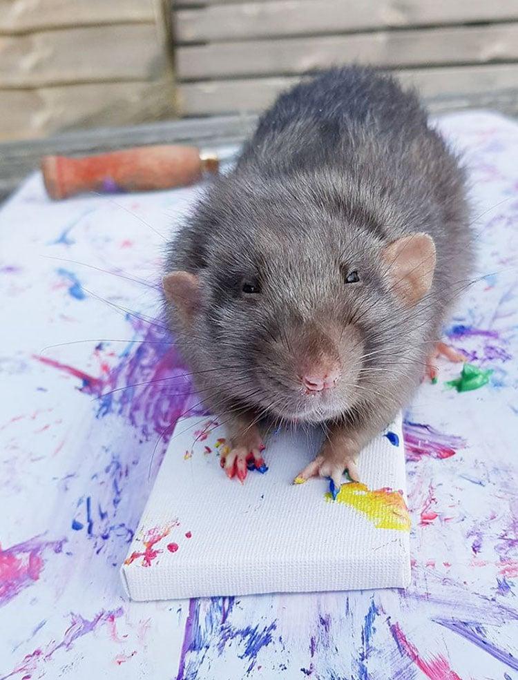 Ratas con sus obras de arte