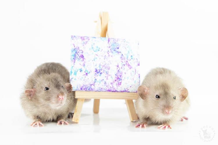 Pinturas hechas por ratas - Toogoods Tiny Paws