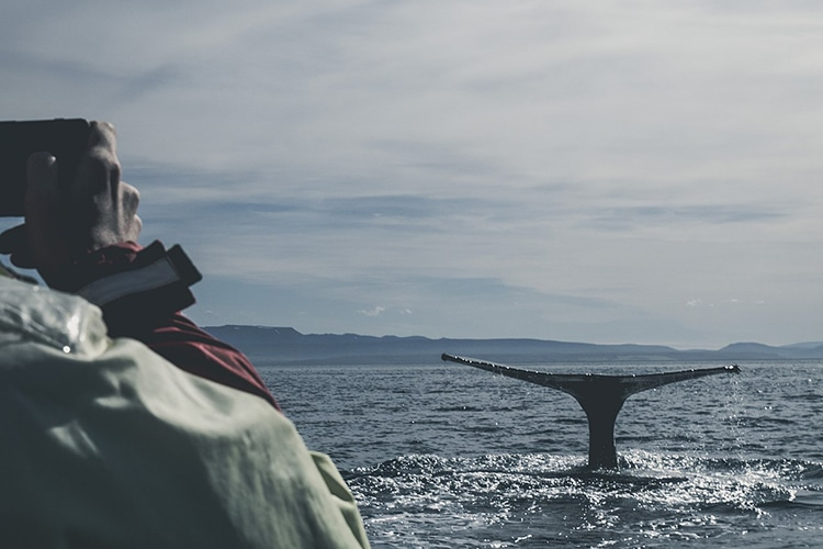 Whale Watcher in Iceland Captures Whale Fin on Camera