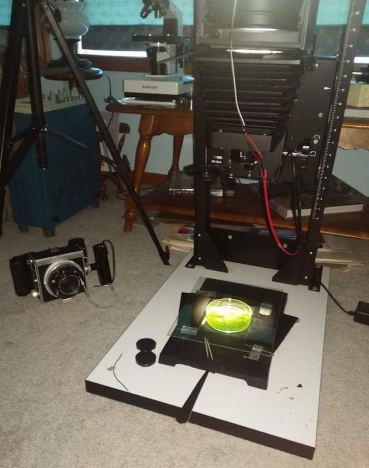 imprimir fotos en algas