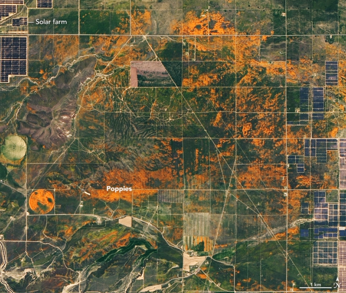 NASA Photo of California Superbloom from the NASA Earth Observatory