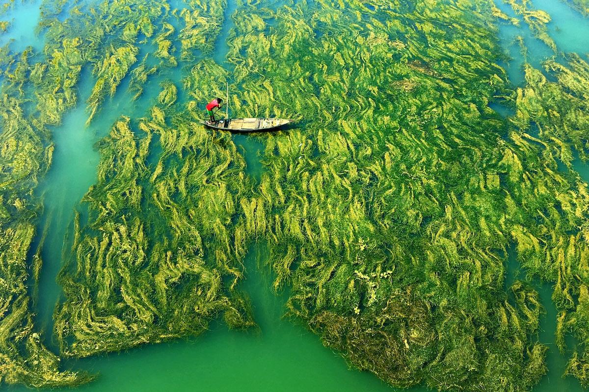 Pescador en un bote en el agua cubierta de algas