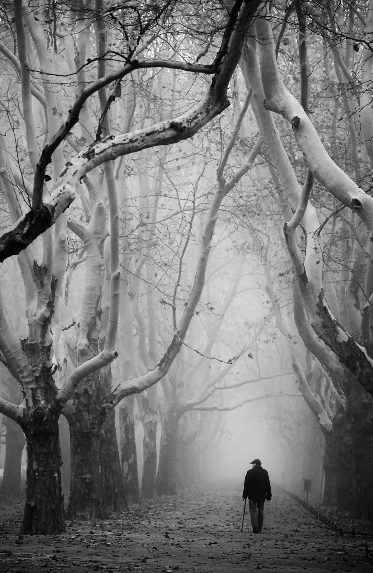 Hombre caminando entre los árboles en Polonia
