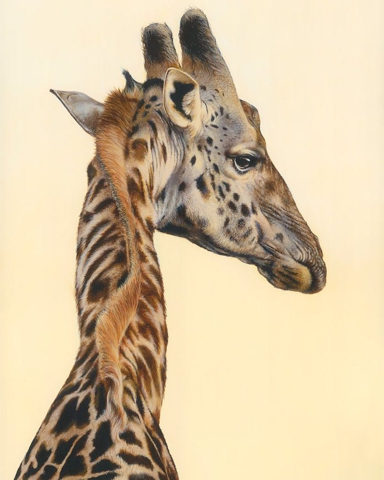 Animal Paintings by Carla Grace