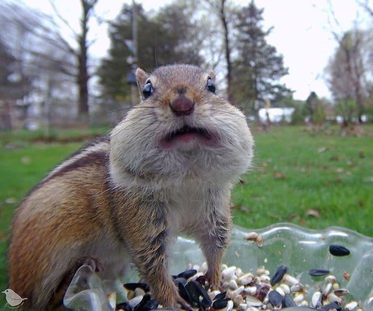 Foto de una ardilla comiendo por Ostdrossel