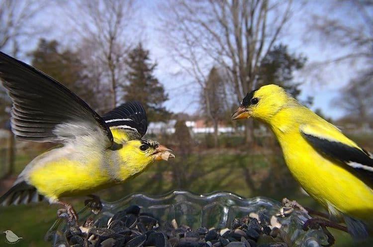 Backyard Bird Feeder Cam by Ostdrossel