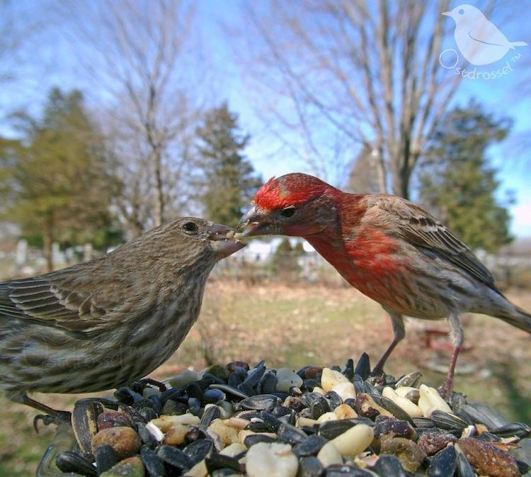 Fotos de pájaros tomadas desde un comedero para aves por Ostdrossell