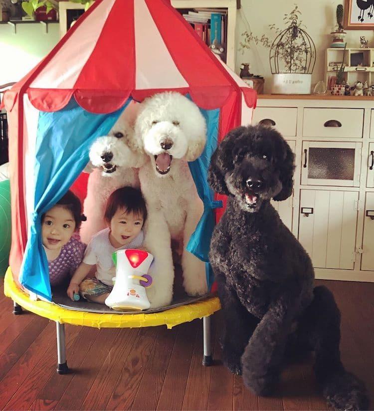 Pets and Kids v