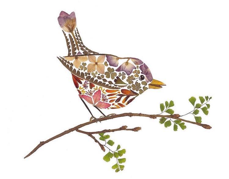 Botanical Illustrations by Helen Ahpornsiriv