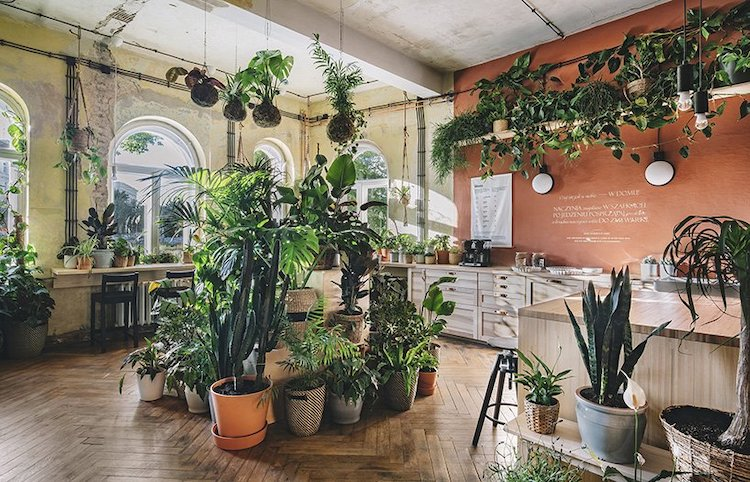 IKEA Home Filled with Plants