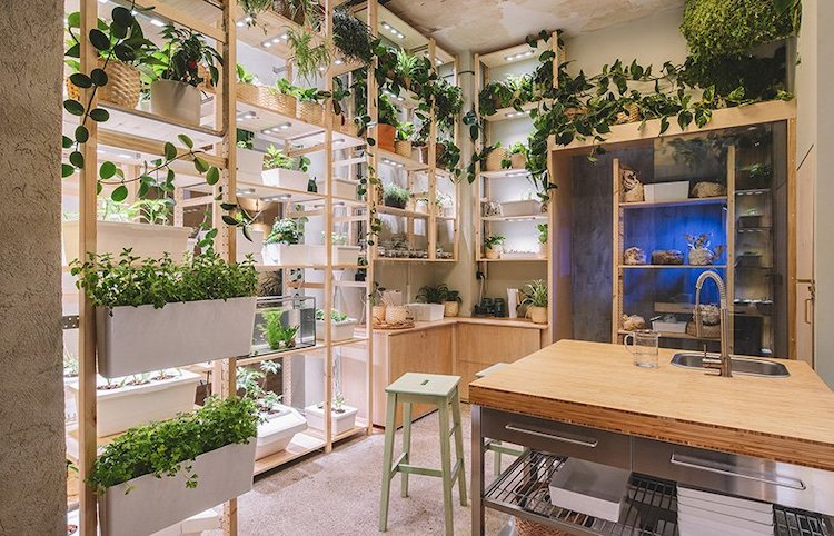 Sustainable Home Filled with Plants