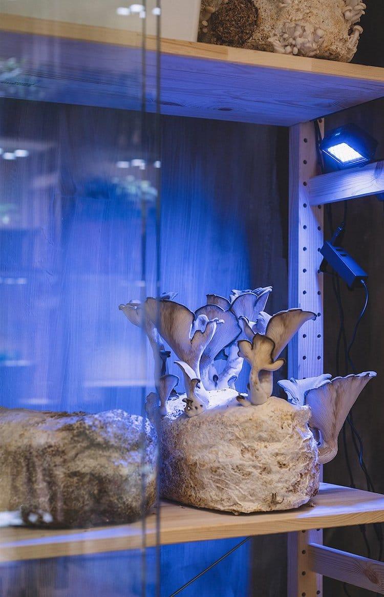 Mushroom in the IKEA Home of Tomorrow
