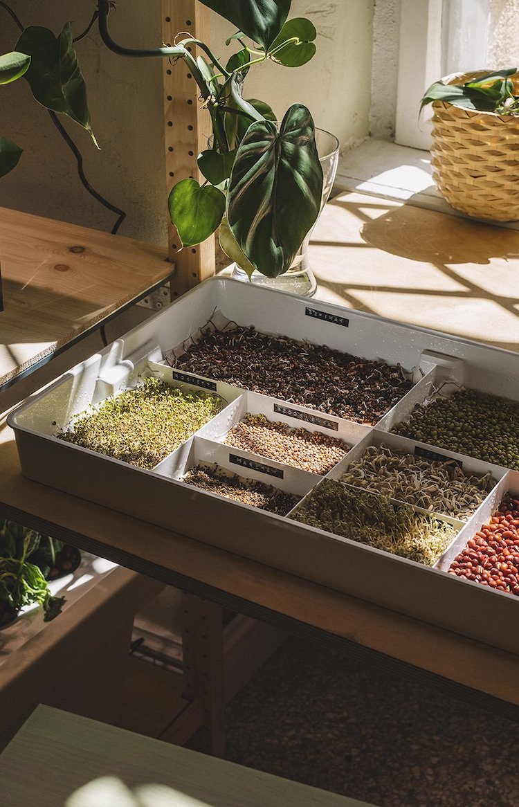Seedlings in the IKEA Home of Tomorrow