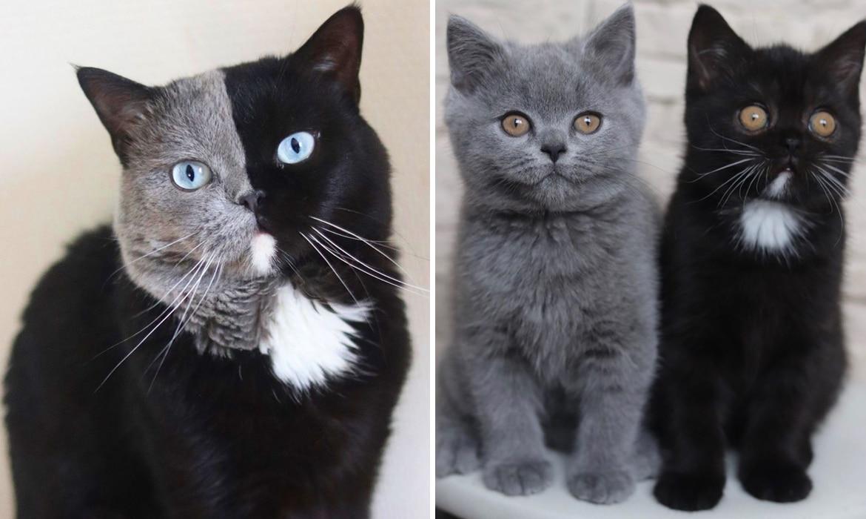 gato dos caras