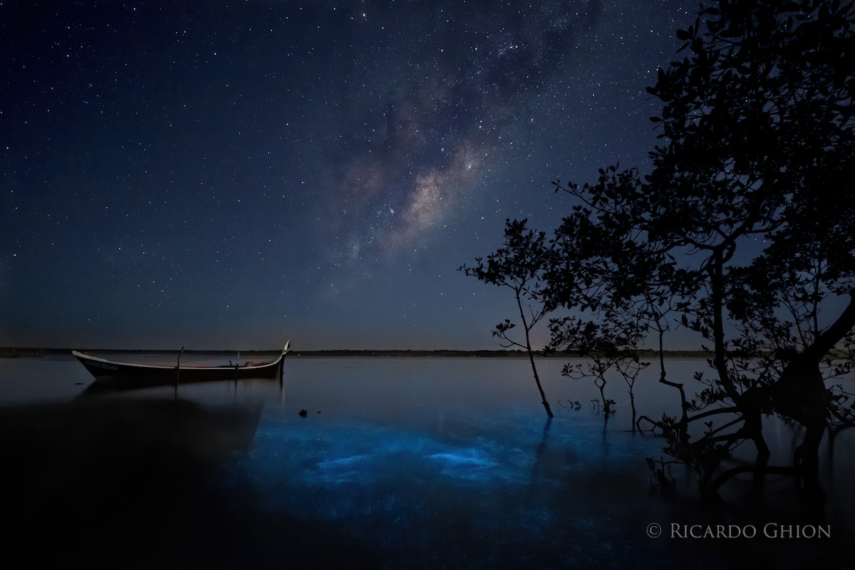 Bioluminescence Over a Marina in Brazil with the Milky Way in the Sky