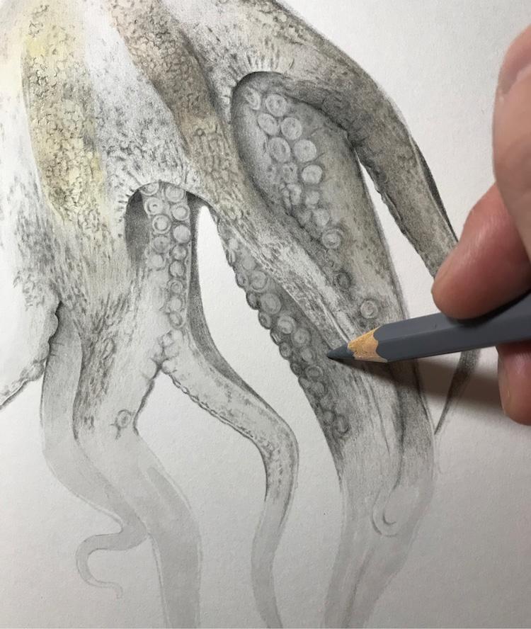 Octopus Drawing by Yukito Kuda