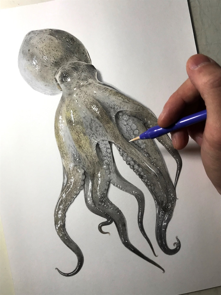 Realistic Octopus Drawing